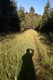 autumn morning on hiking trail with grass and forest around with clear sky in Luzicke hory mountains