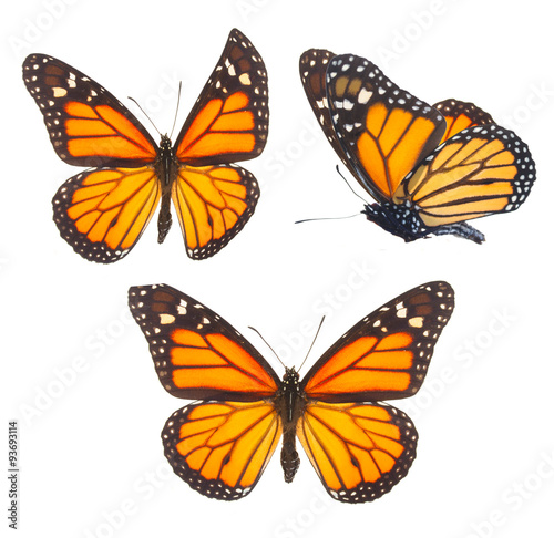 Aluminium Vlinder Monarch butterfly