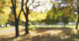 Fototapety blurred background of autumn park