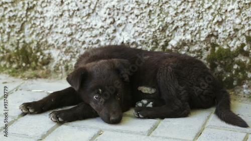 poster of Vagrant dog pooch
