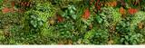 Fototapety big vertical garden - großer vertikaler garten - Pflanzwand