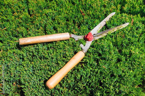 Foto op Canvas Azalea Gardening shears to trim hedges and bushes