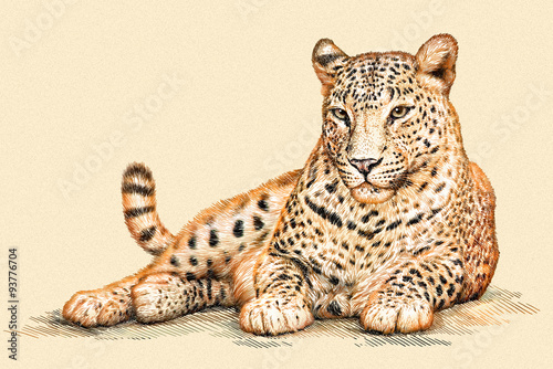 Fototapeta engrave leopard illustration