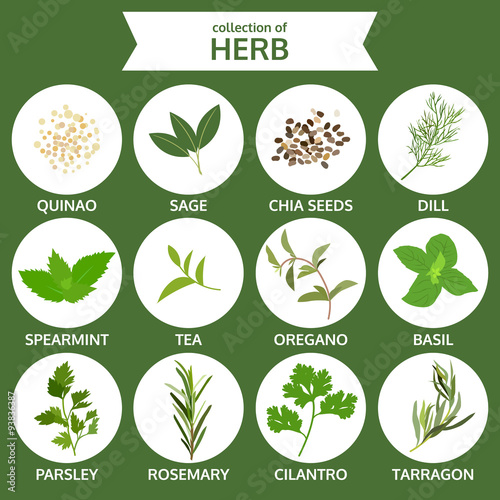 collection of herb, food vector, flat icon set