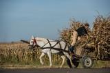 Farmer climbing on a wagon during corn harvest