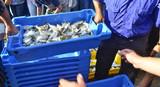 Lonja pesquera.