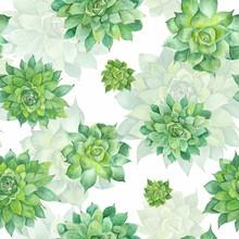 Watercolor Succulent patroon op witte achtergrond