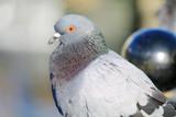 птица на заборе