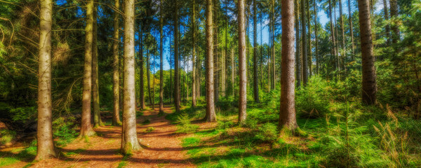 HDR Wald Panorama im Herbst