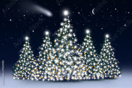 Naklejka Christbäume bei Nacht