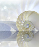 Nautilus shell cut