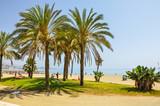 Fototapety Málaga, palmeras en la Playa de la Malagueta, Andalucía, España