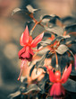 fall flowers with red buds