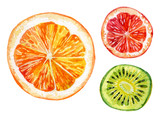 Fototapety Watercolor set of fresh orange, kiwi and grapefruit