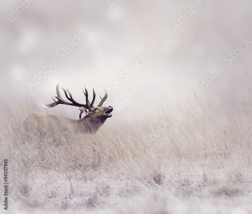 Elk in Winter - 94307968