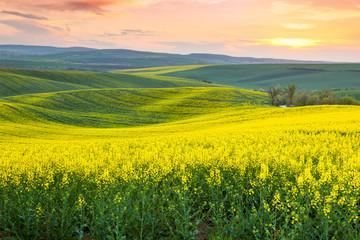 Wiosna świeży krajobraz kolorowych pól, wschód słońca niebo i