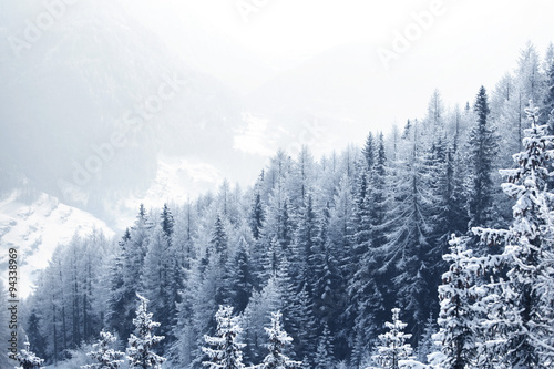 Snow covered forest - 94338969