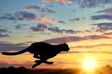 Running cheetah silhouette