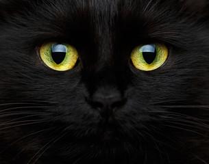 Ładny kaganiec czarny kot