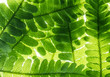 green fern leaves in the detail