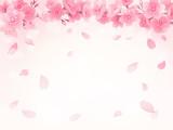 桜 背景 イラスト - 94455984