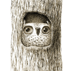 Сute Baby Owl Sitting in the Tree Hollow