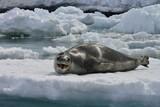 Leopard Seal!