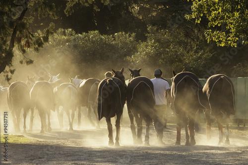 Zdjęcia na płótnie, fototapety, obrazy : caballo equino deporte
