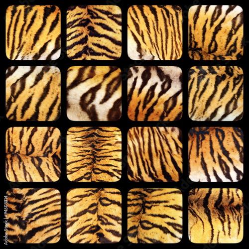 Papiers peints Panthère collection of real tiger fur textures