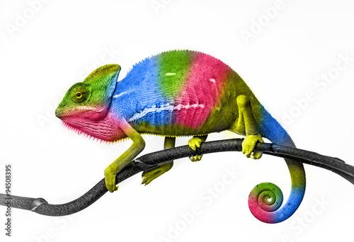 kameleon - kolory