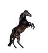 Obrazy na płótnie, fototapety, zdjęcia, fotoobrazy drukowane : horse isolate