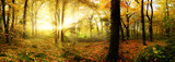 Fototapety Autumn forest with sun rays