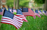 Field of American flags. - 94676731
