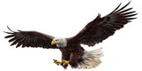 Fototapety Bald eagle flying draw and paint on white background vector illustration.
