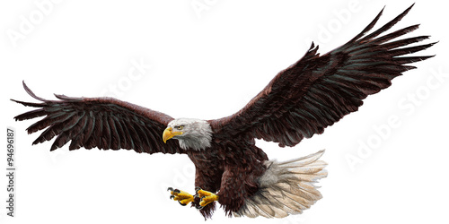 Bald eagle flying draw and paint on white background vector illustration. - 94696187