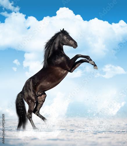 hodowalem-konia