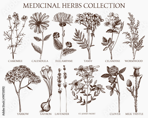 Vector collection of hand drawn spices and herbs. Botanical plant illustration. Vintage medicinal herbs sketch set.