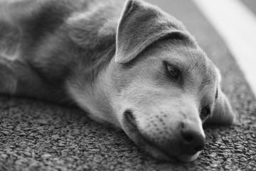 Lonely dog © tuastonvilla