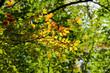Herbstlaune