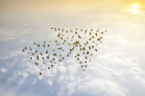 Fototapety Birds on sky , growth development concept