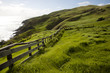 Sheep Pasture - New Zealand