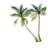 Fototapety Palm tree isolated on white background. watercolor