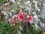 fleurs rocher