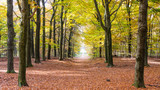 Fototapety Walking  in autumn colors in the forest of Nartional park the Ho