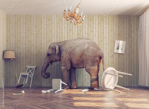 Fototapeta a elephant in a room
