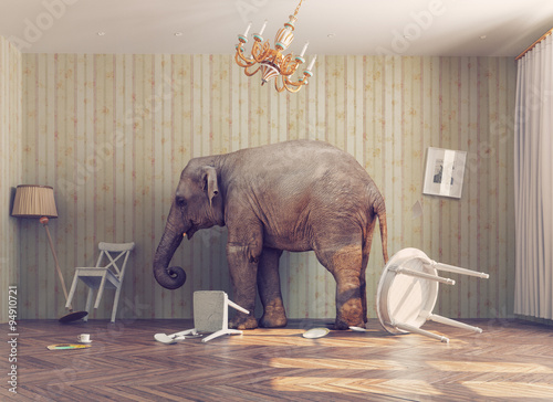 a elephant in a room