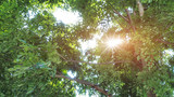 Sun ray glimmering through tree leaves poster