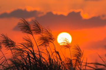 ススキと夕日 © imacoconut