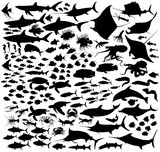 Saltwater fishes vector silhouettes collection