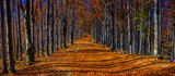 Fototapety Colorful autumn trees